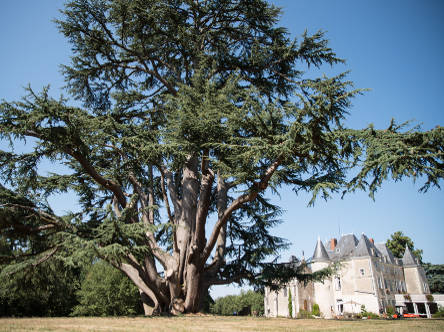 Chambres d 39 hotes chateau vienne 86 - Chambres d hotes chateau ...